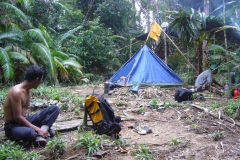 Tent in the jungle