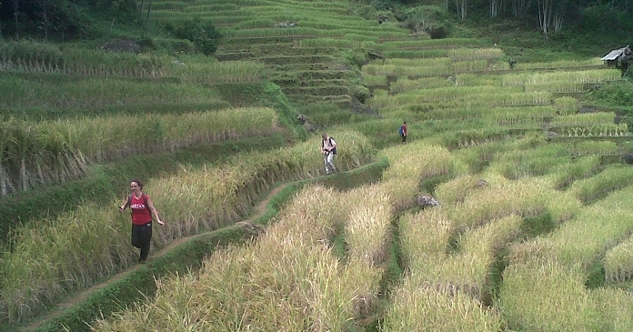 Walking in the rice field